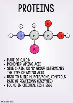 Macromolecules Poster Pack by Science Lessons That Rock