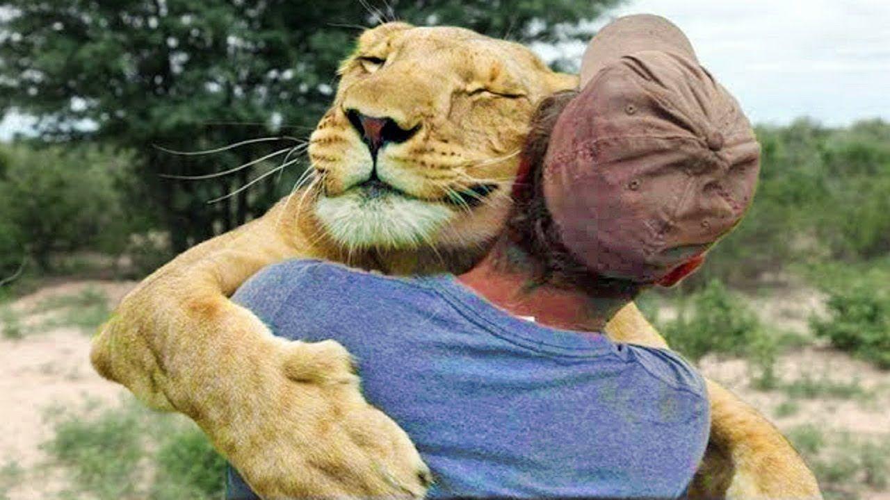 Animal Hugs Animals Hugging People Animals Hugging