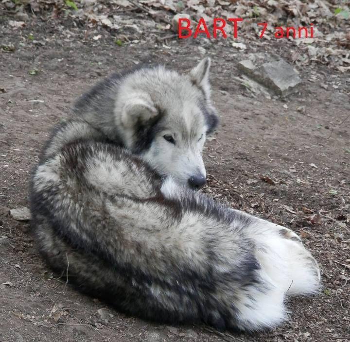 Pin Su Pets Charity