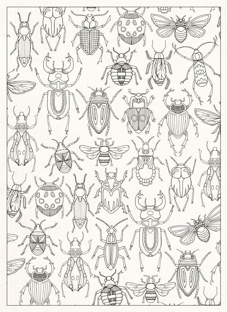 Bug Coloring Page 727 zvata Pinterest Insects