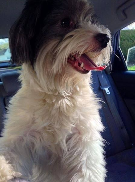 Warwick Found White W Grey Dog Bend St Near Bend Street