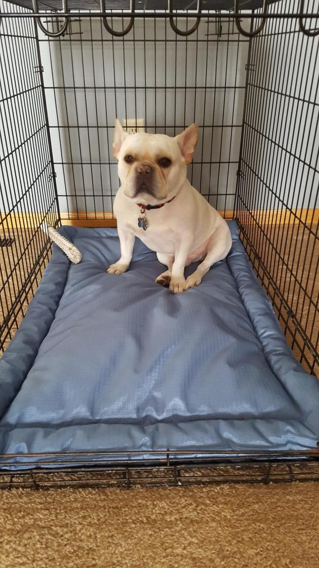 K9 Ballistics Tuff Crate Pad Best Chew Proof Dog Bed Indestructible Dog Bed Dog Beds Uk Indestructable Dog Bed Chew Proof Dog Bed