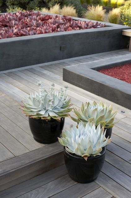 Grow A Garden Of Succulents For Easy Beauty Succulent Landscape Design Asian Landscape Succulent Landscaping