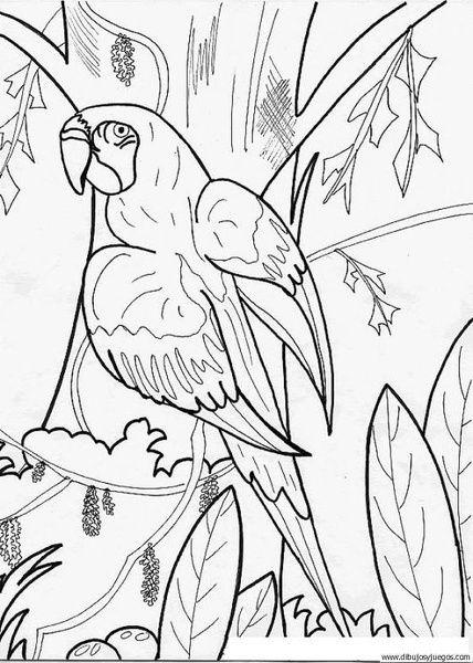 Pin de Golumbeanu Elena en Stiinte | Pinterest | Loros, Dibujos de y ...