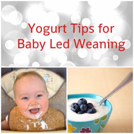 Blw Yogurts Tips What Type And How To Serve Including Secret Amazing Tip On Self Feeding Yogurt Baby Led Weaning Baby Food Recipes Yogurt