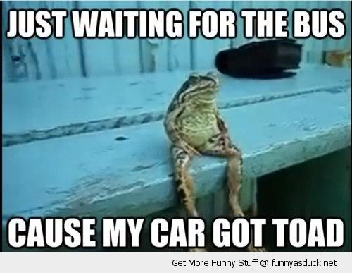 Waiting Funny | toad frog animal waiting on bus funny pics pictures pic picture image ...