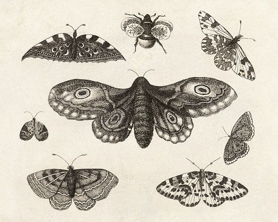 Winged Things - FREE SHIPPING 8x10 Insects Bugs Wings Moths Butterflies Bee Specimens Science Diagram Line Drawing Digital Cream Black