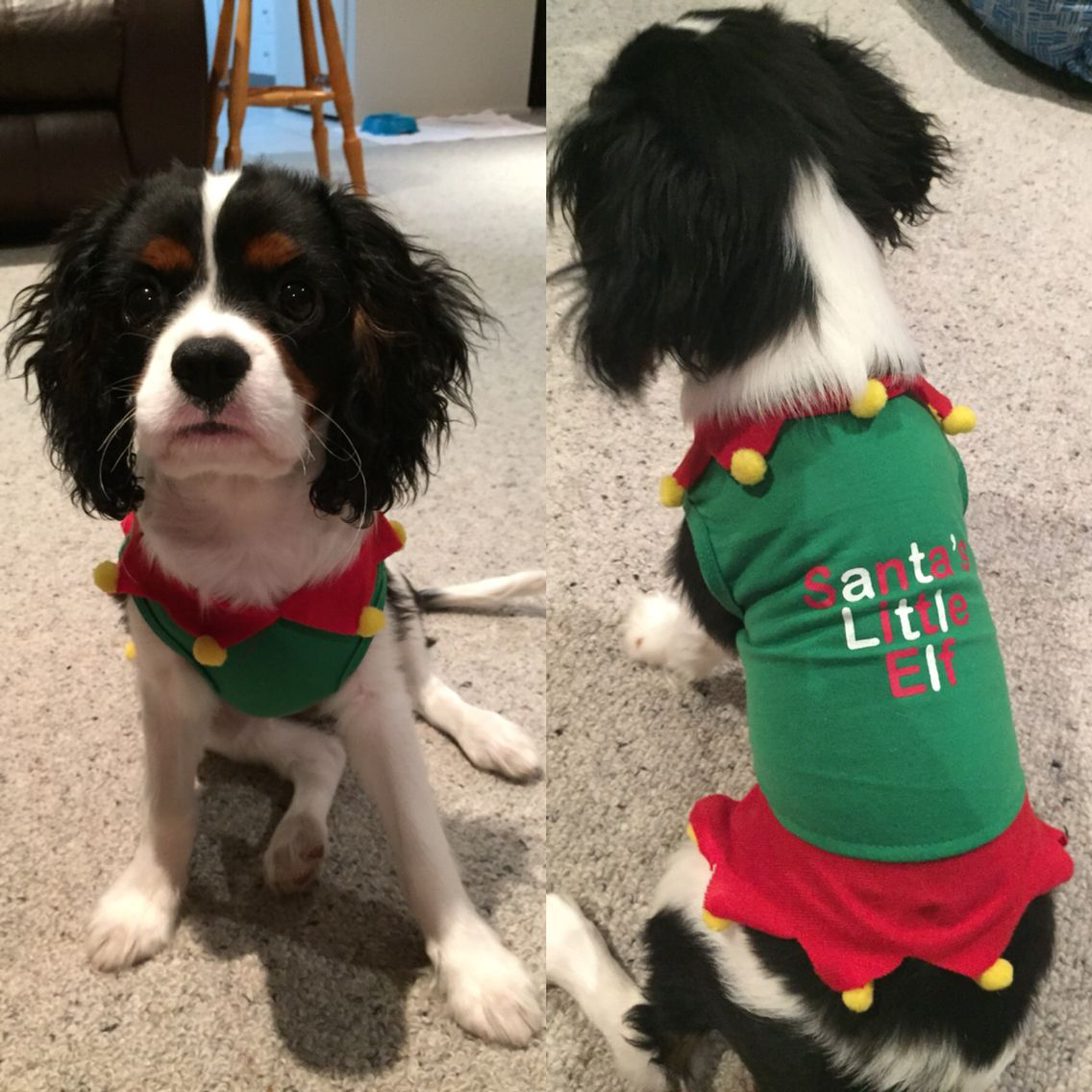 Rocco gets ready for Christmas!