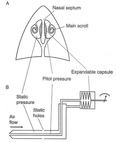 bird flight diagram bird flight ii  with images  birds  nasal septum  capsule  bird flight ii  with images  birds