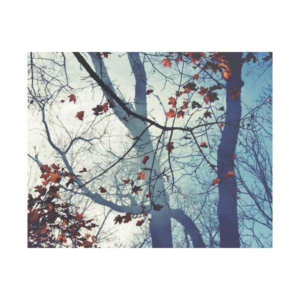 Mystical Woods Photograph Light Blue Tree Branches Smoke In The Air 30
