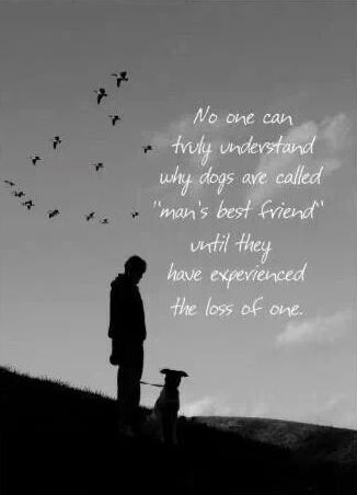 Pin By Julie Hanscom On Beloved Animals After The Rainbow Bridge Dog Sympathy Dog Sympathy Card Losing A Dog Quotes