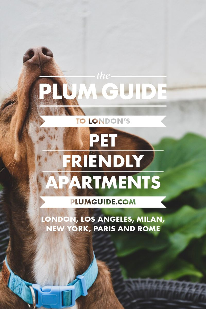 8 Of The Best Pet Friendly Apartments In London Pets