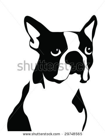 how to draw a boston terrier head
