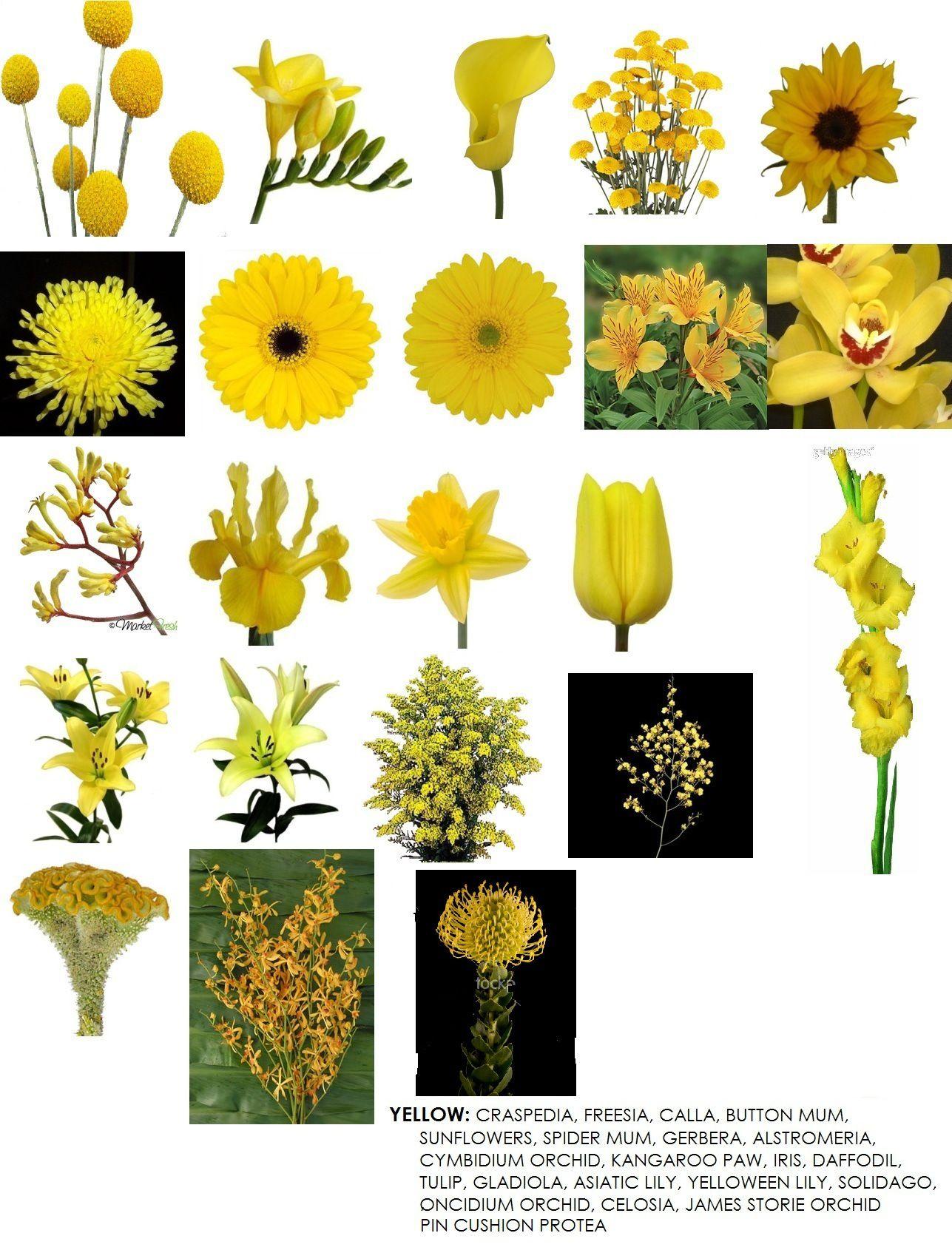 Tipos de flores amarillas wedding flowers pinterest - Clases de flores amarillas ...