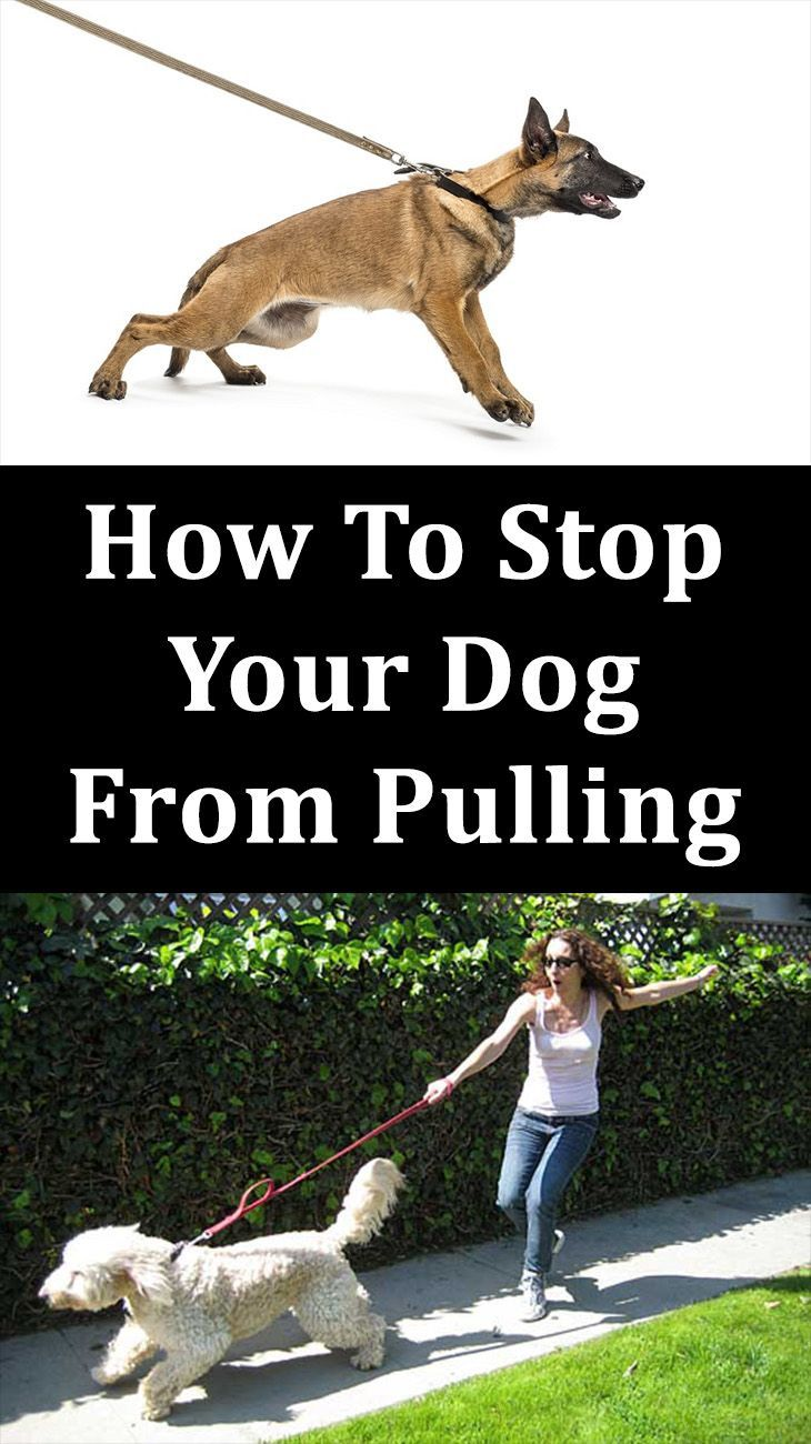 How To Stop Your Dog From Pulling Dog Training Cute