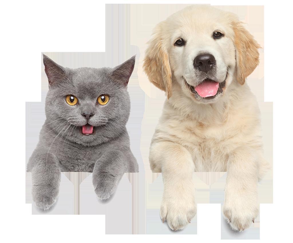 Https Pets Vcahospitals Com New Near Me Medium Tsa Utm Medium Cpc Utm Source Google Utm Campaign Philadelphia Brand Utm Content Bran Cat Furry Pets Hyper Pet
