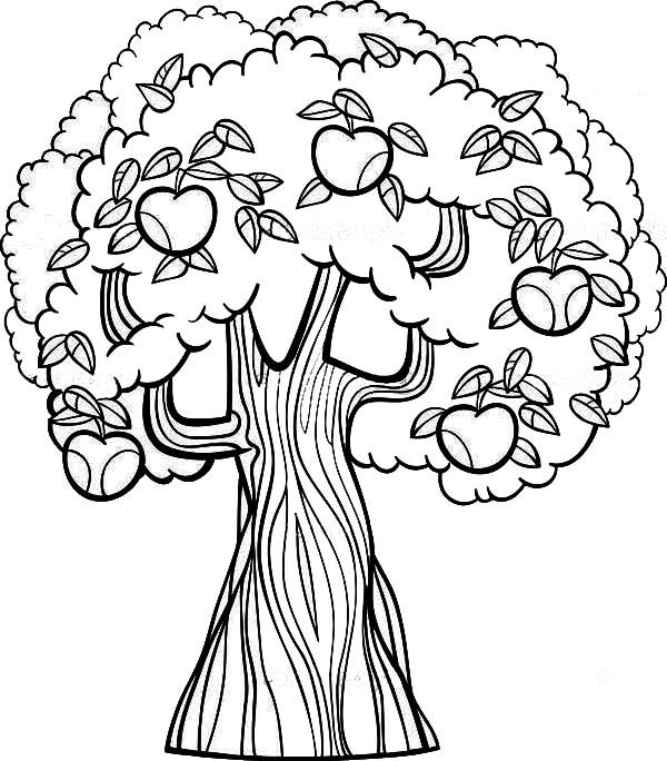 Apple Tree Old Apple Tree Coloring Page Coloring Books