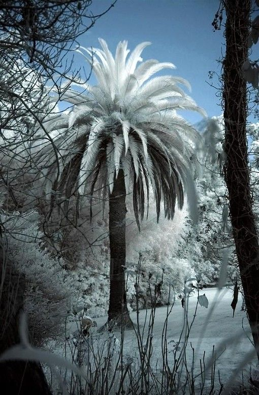 """An unlikely snow. ~ Miks' Pics """"Nature Scenes lV"""" board @ http://www.pinterest.com/msmgish/nature- scenes-lv/"""