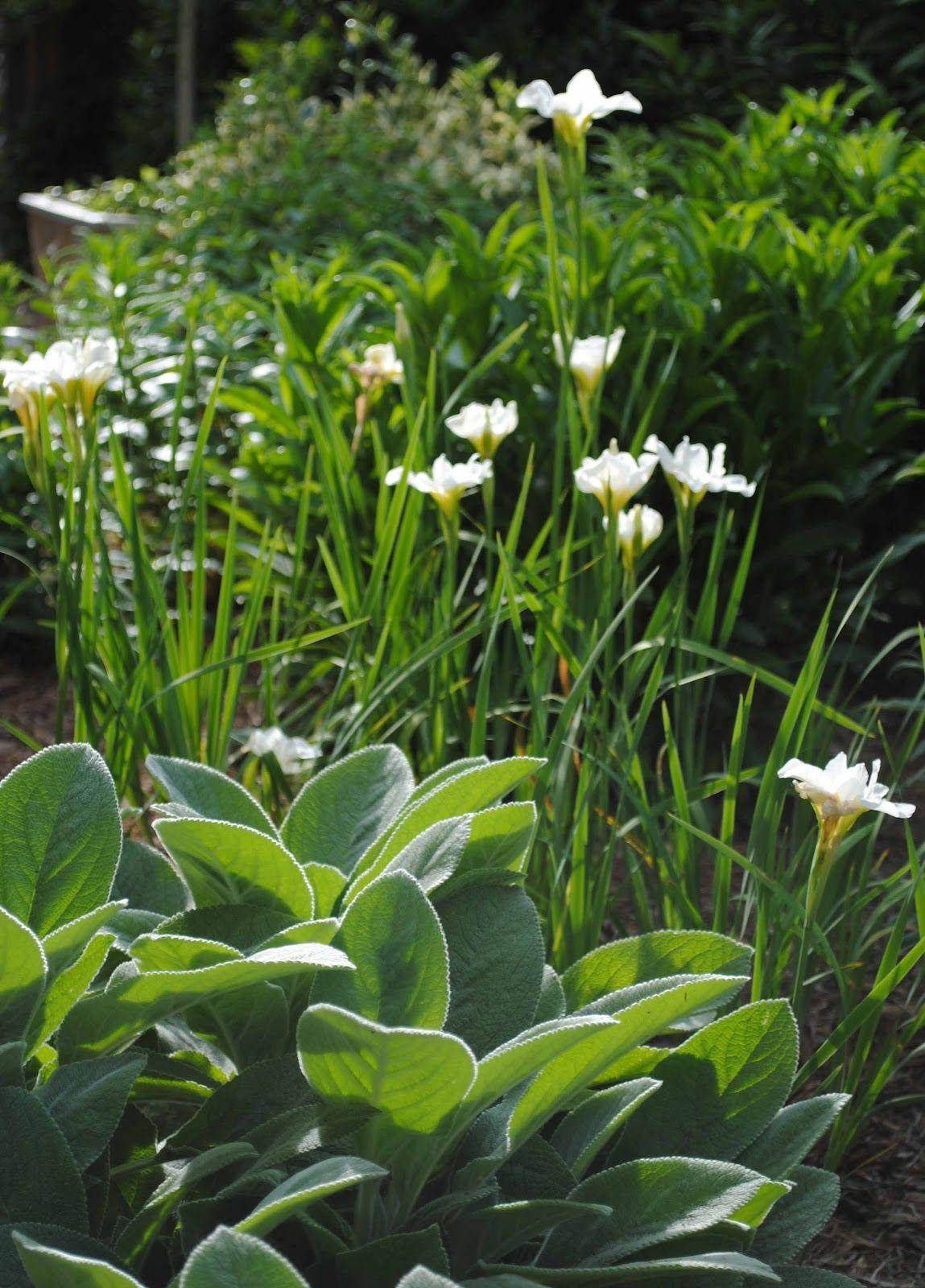 Whicg landscaping ideas pinterest garden