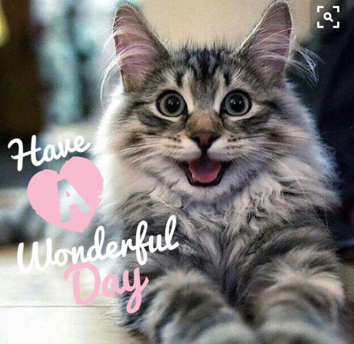 Image result for happy day cat