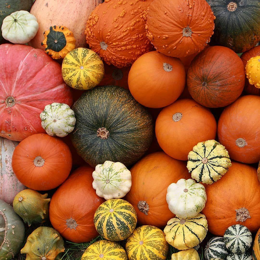 Jeszcze Wiecej Dyn More Pumpkins Pumpkin Happy Birthday Vegetables
