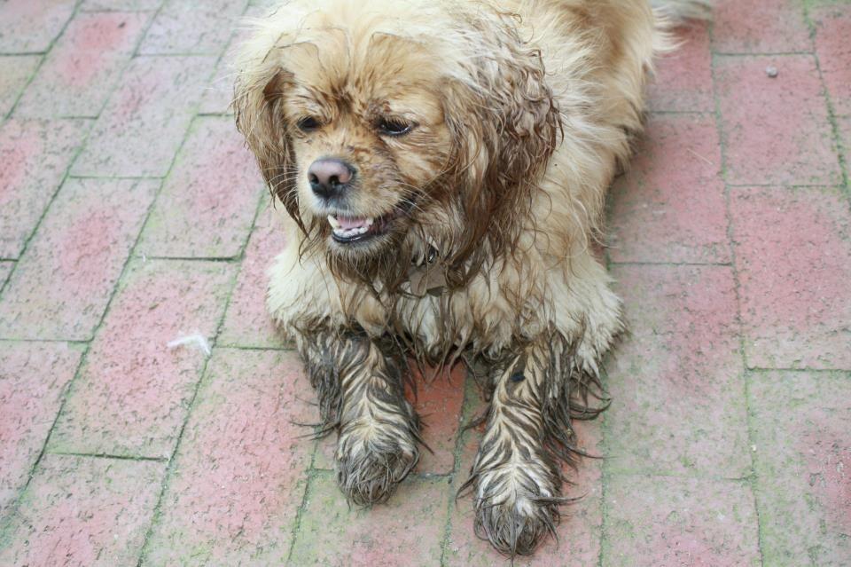 #Muddy #Dogs