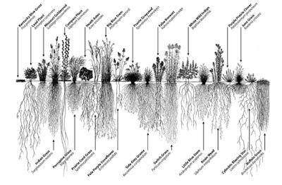 Naturaleza y Voluntariado Ambiental: Por qué las praderas importan y los céspedes no