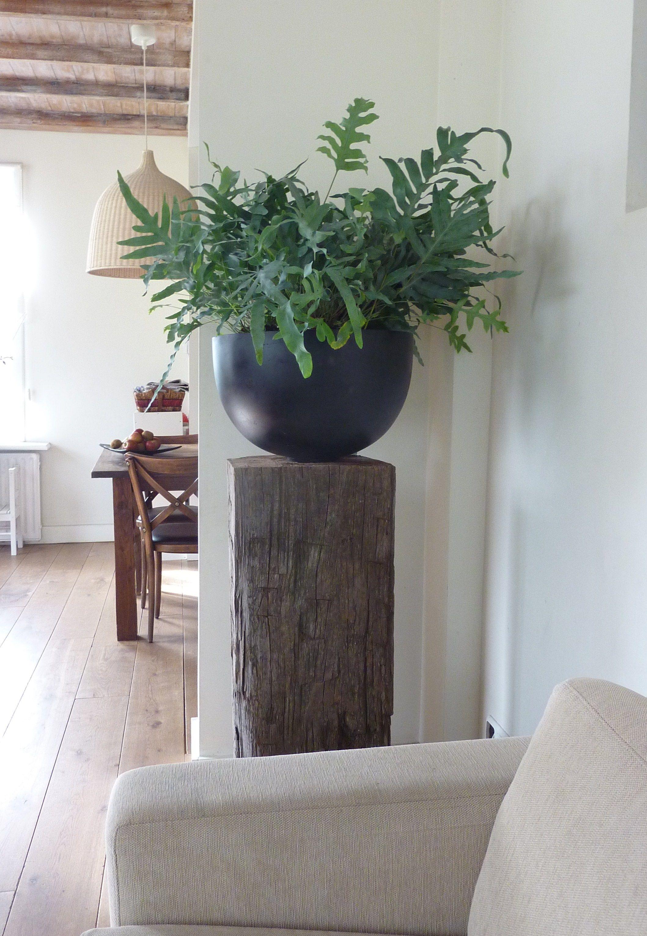 Grote pot met orideen op zuil bloemen kamerplanten t