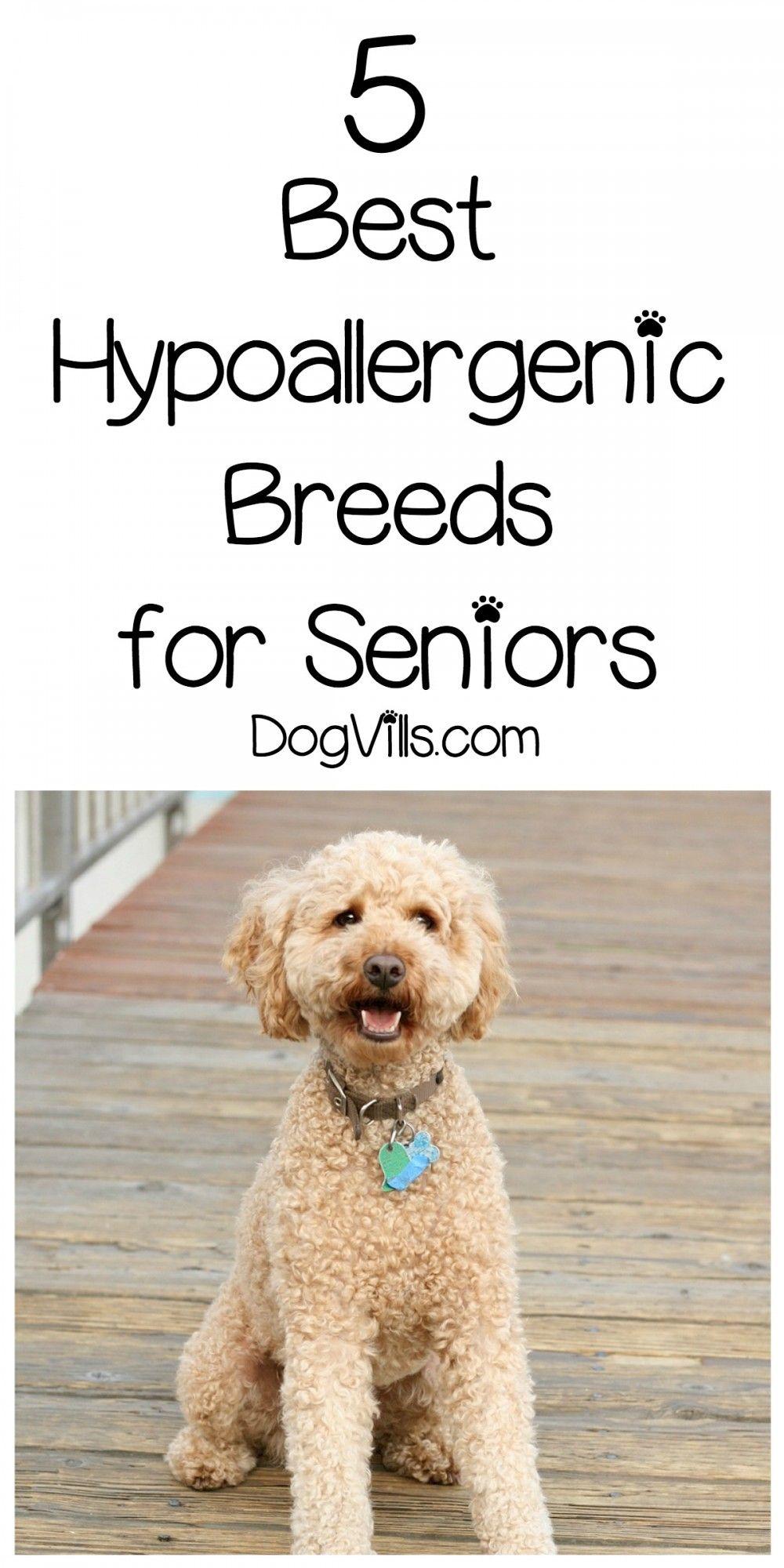 5 Best Hypoallergenic Breeds for Seniors Best