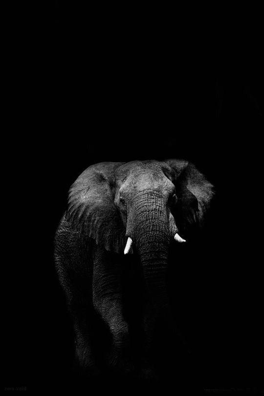 Pin By Bastiaan Van On Phant Elephant Photography Animal Photography Elephant Wallpaper
