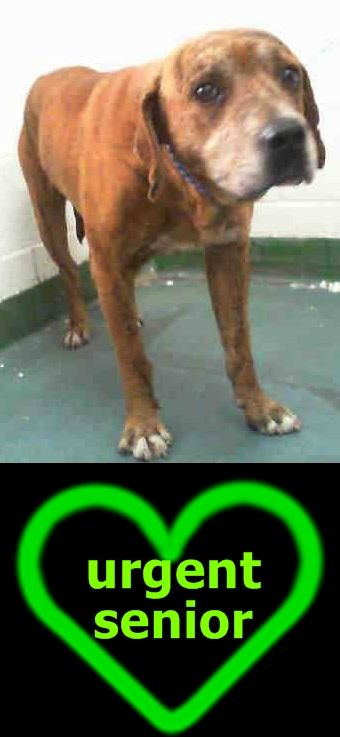 SKEETER (A1761747) I am a male tricolor Labrador Retriever mix. The shelter staff think I am about 10 years old and I weigh 60 pounds. I was found as a stray and I may be available for adoption on 02/24/2016. — Miami Dade County Animal Services. https://www.facebook.com/urgentdogsofmiami/photos/pb.191859757515102.-2207520000.1456346820./1134146013286467/?type=3&theater