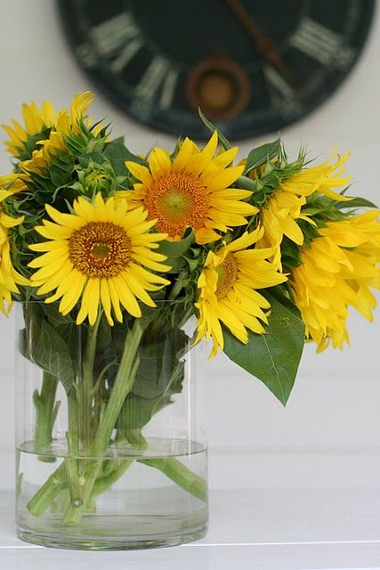 Sunflower Sunshine Con Imagenes Girasoles Flores Fotos De