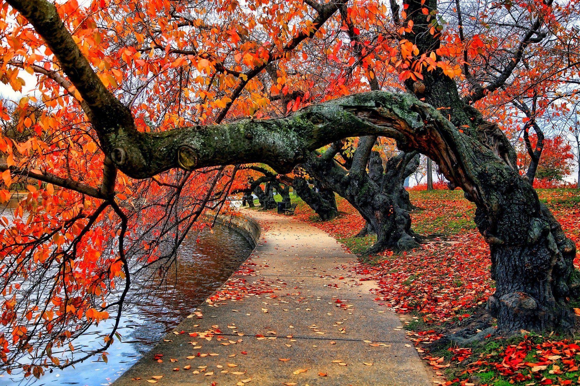 autumn trees road wallpaper. | hd wallpapers | pinterest | iphone