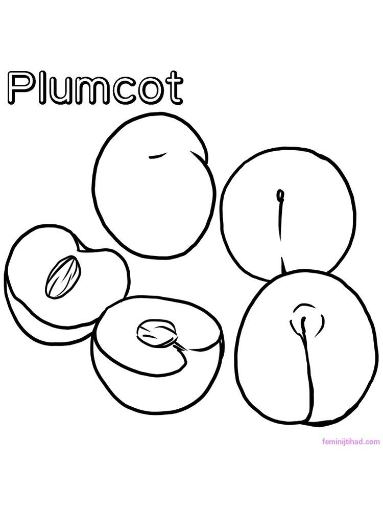 Free Plumcot Coloring Page Printable The Plumcot Is A Hybrid