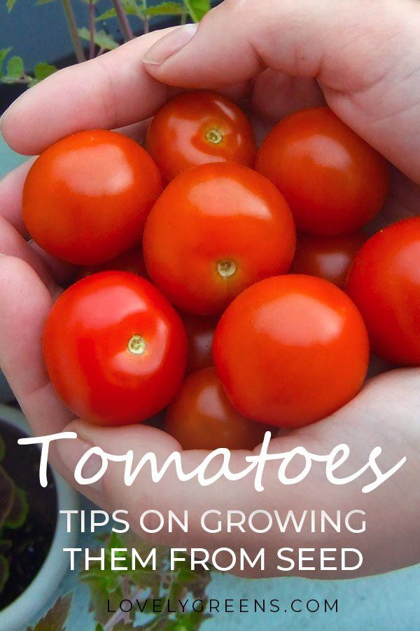 Growing Tomatoes From Seed Sowing Times Compost And 400 x 300
