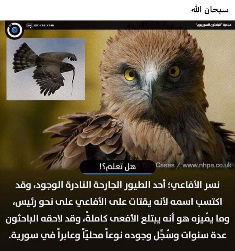 Pin By Yusra Abed On هل تعلم Animals Owl Bird