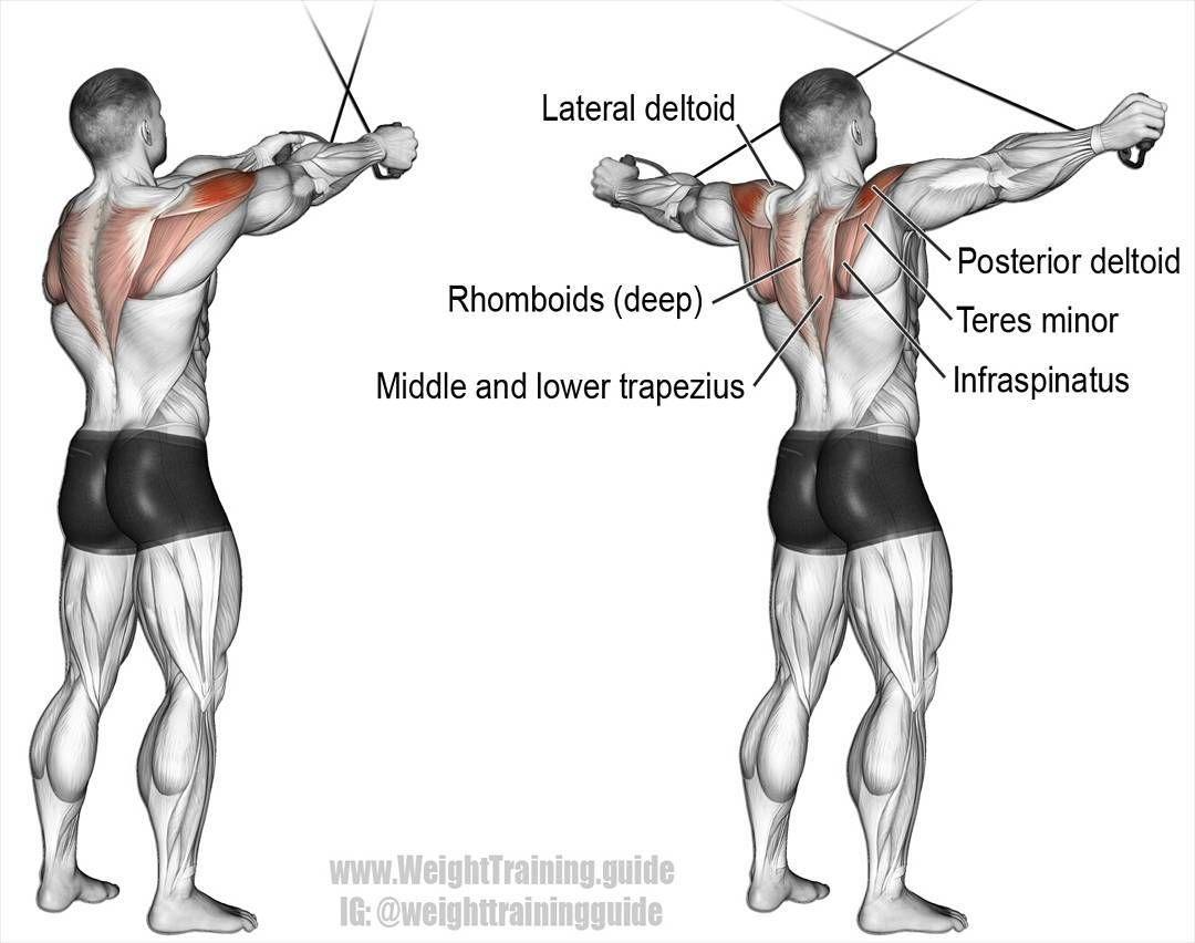 a9b7e2df5 No photo description available. | urmite workouts | Shoulder workout ...