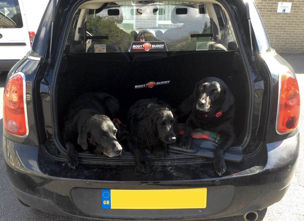 This Is Harry Poppy And Serena In The Boot Of My Mini Countryman