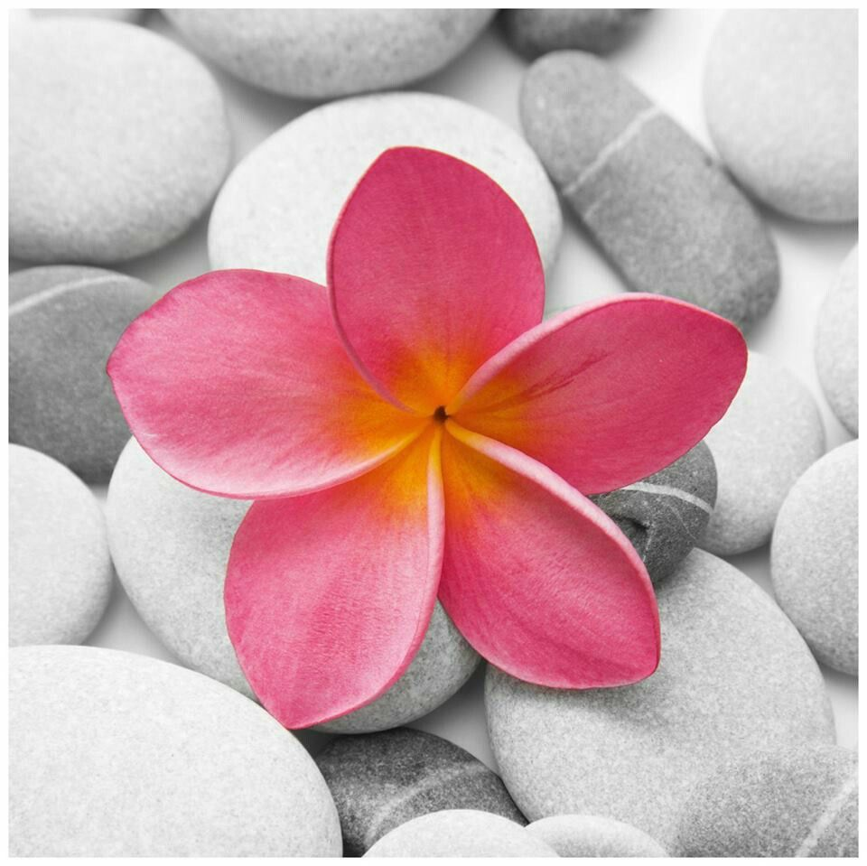 Plumeria Tattoo Idea In Love With This Flower Flower Prints Art Flower Canvas Wall Art Flower Art