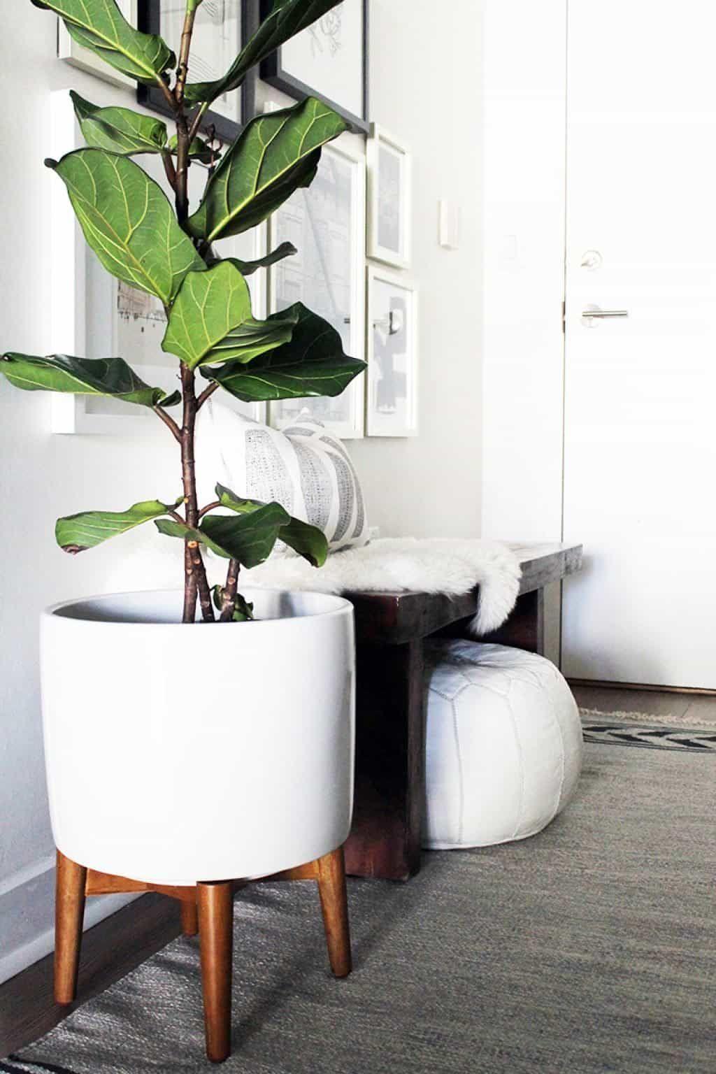 Choosing Plant Stands For Indoor Plants Large Indoor Plants