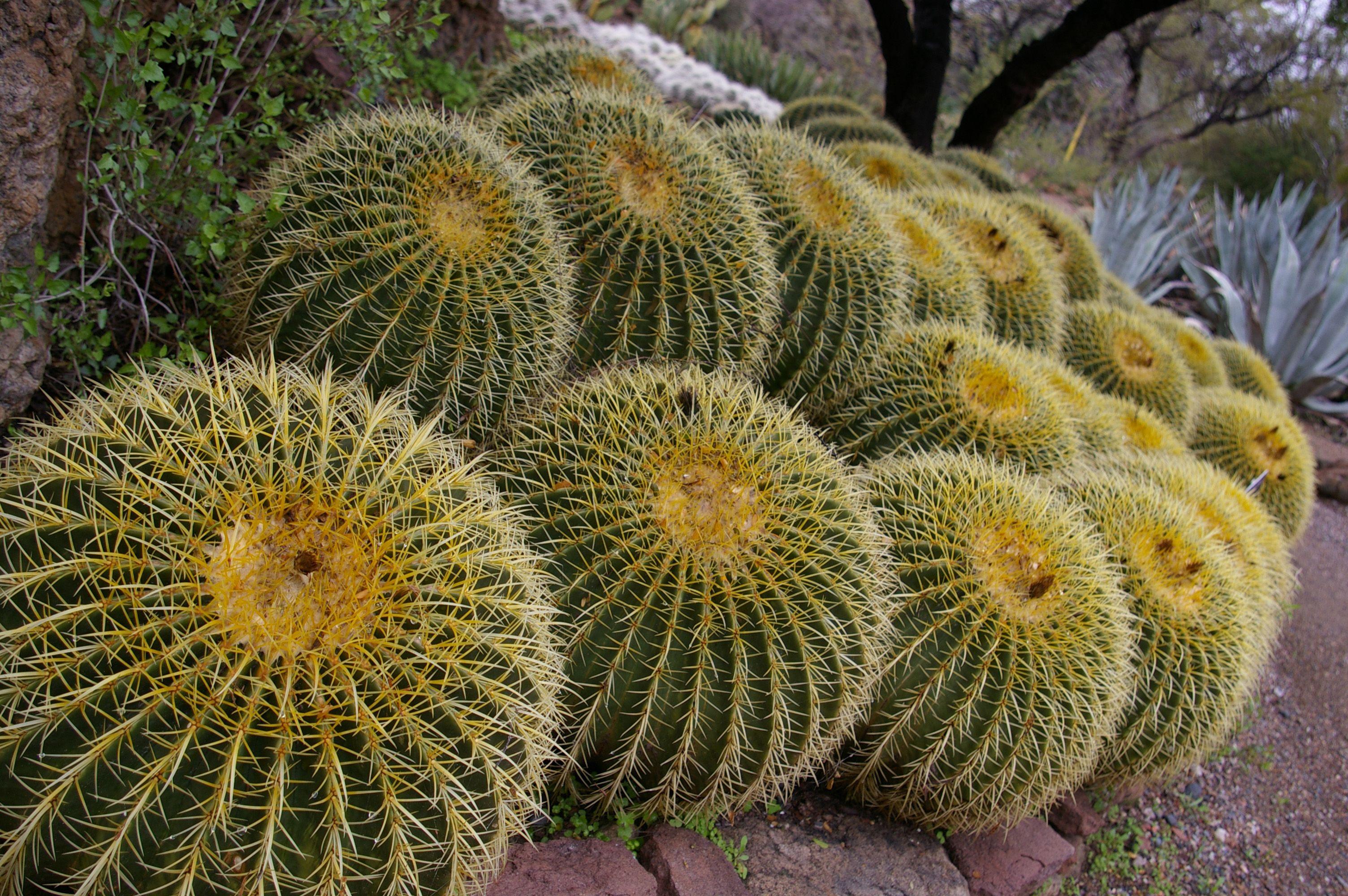Desert Plants | Sonoran Desert plant community | Desert ...