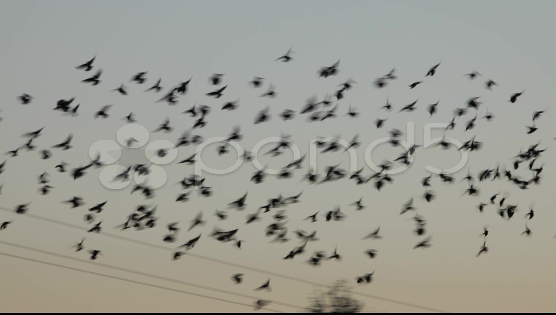 A Flock Of Small Birds Flying To Rest On A Phone Line Stock Footage Birds Flying Flock Small Birds Flying Small Birds Birds