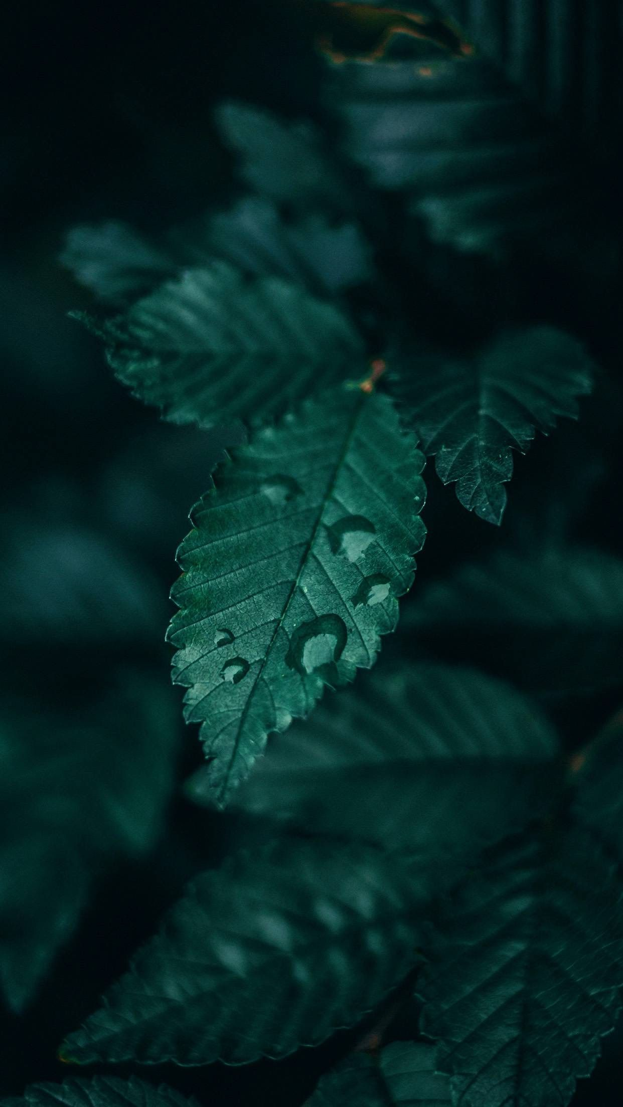 Pin By Namanpreet On Wallpaper Dark Green Aesthetic Green Nature Leaf Photography