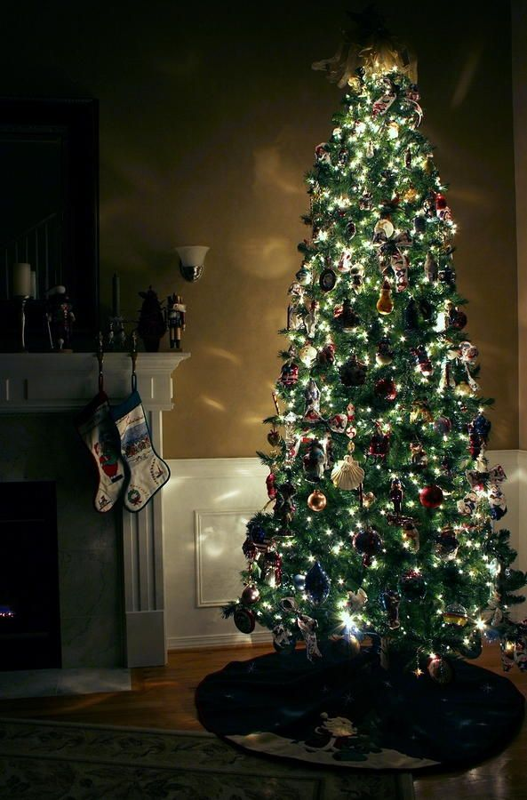 How to Keep a Christmas Tree Alive During the Holiday Season ...