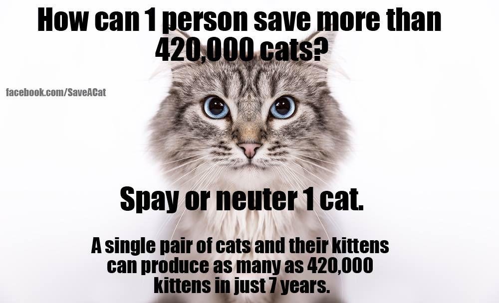 28 Funny, Heartwarming, & ShareWorthy Cat Memes [GALLERY