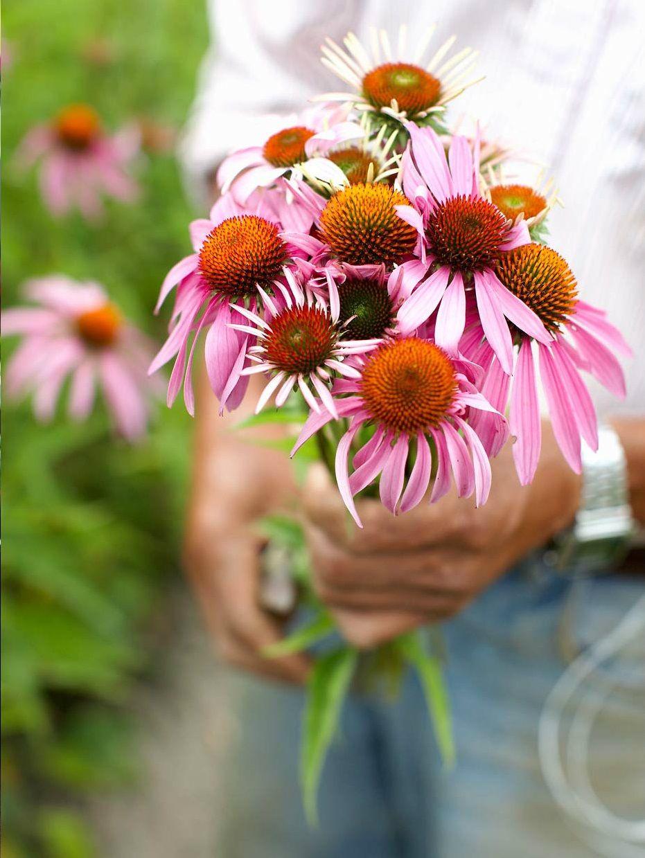 Pin By Nini S Higgledy Piggledy On In Nature Flower Farm Beautiful Flowers Wildflower Garden