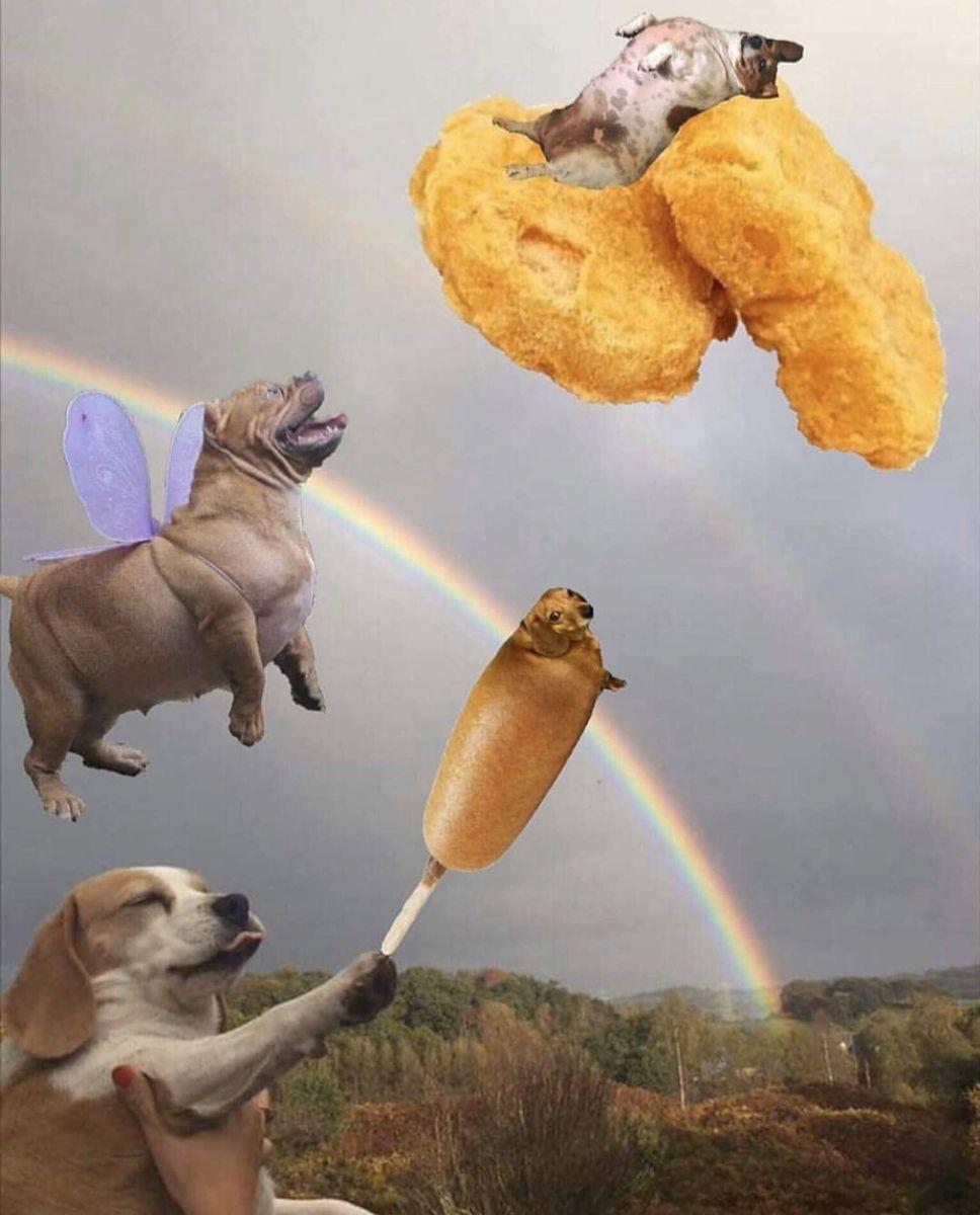 Dog Wont Walk Meme