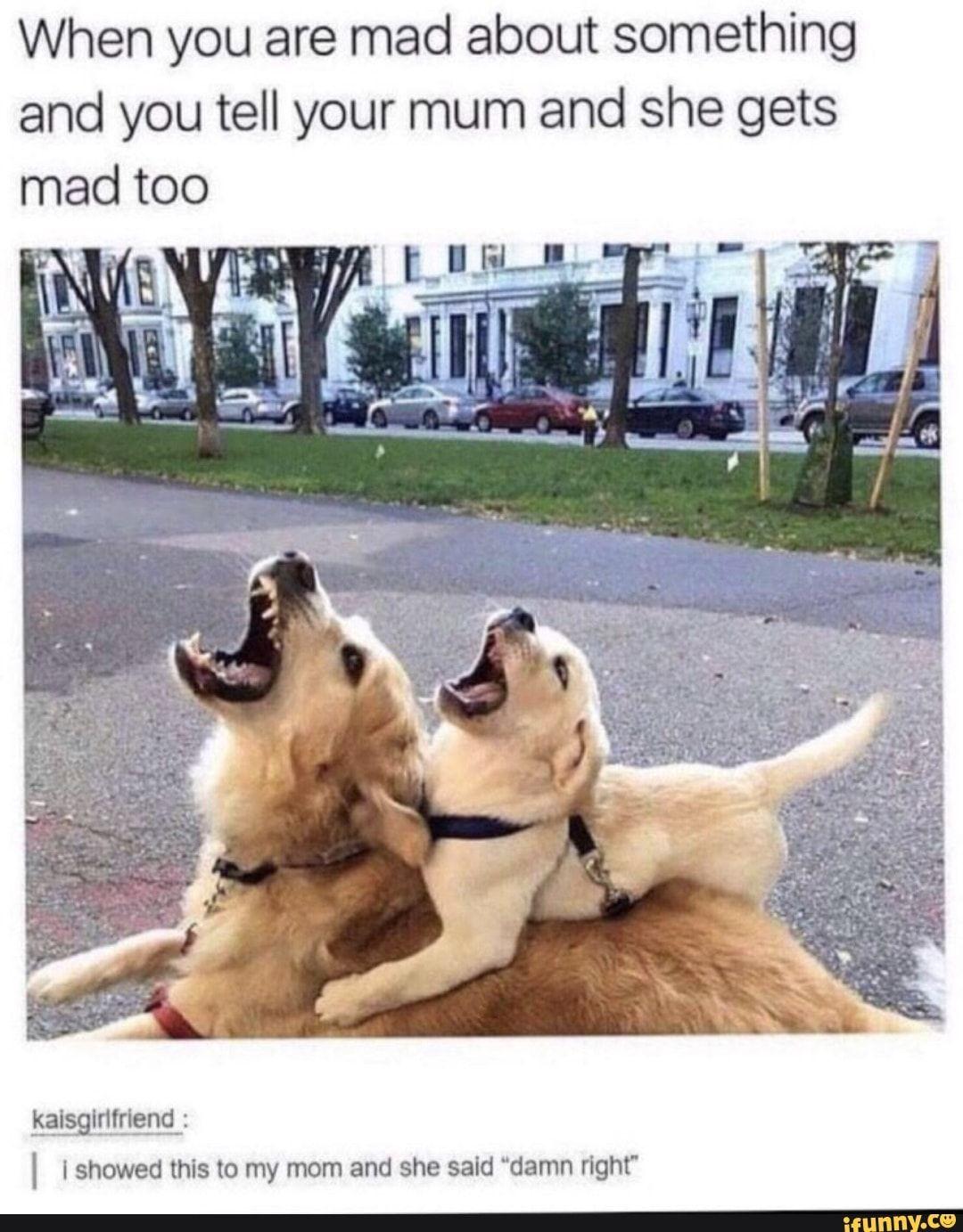 Mad Mom Meme : Funny, Savage, Memes