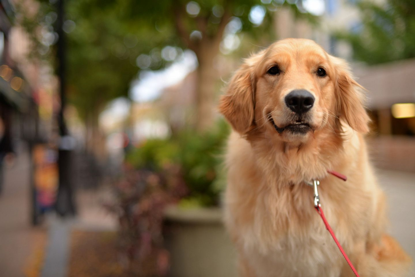 Canada's Top 10 Most Popular Dog Breeds Lymphoma in dogs