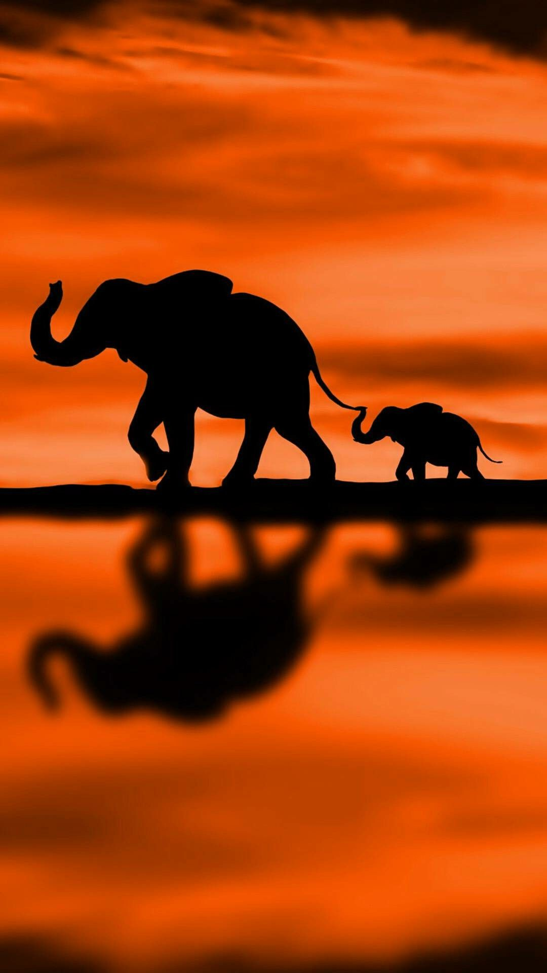 Baby Elephant Background : elephant, background, Elephant, Following, Mother, Beautiful, Orange, Background, Photography,, Silhouette, Painting,